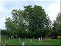 SU0692 : A brief evening stroll around All Saints, Leigh (c) by Basher Eyre