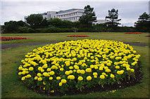 SD4264 : Promenade gardens, Morecambe by Ian Taylor