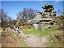 SE2065 : 'Dancing Bear', Brimham Rocks by Derek Harper