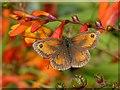 ST3086 : Orange on orange by Robin Drayton