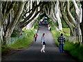 D0333 : Tourists, The Dark Hedges, Derrykeighan by Kenneth  Allen