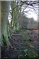 TQ4432 : Boundary beeches, Ashdown Forest by Robin Webster