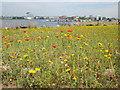 ST1973 : Wild flower garden at Cardiff Bay by Debbie J