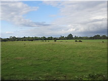 N3922 : Fields from the train by Ian Paterson