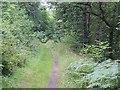 NJ2041 : Strathspey Railway trackbed by Richard Webb