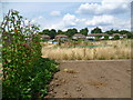 TQ1279 : Allotments at Bixley Field by Marathon