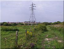 SD4260 : Rough grazing, Heysham Moss by Ian Taylor