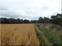 NZ1465 : Hadrian's Wall Path passes between fields and The Tyne by Anthony Parkes