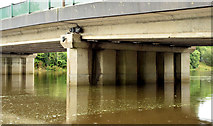 J3371 : The tidal River Lagan, Stranmillis, Belfast (10 August 2014) by Albert Bridge
