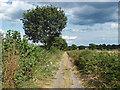 SU8772 : Footpath to Warfield by Alan Hunt