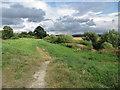 SE8072 : Riverside paths by Pauline E