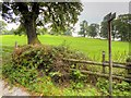 SJ8740 : Footpath to the east of Stone Road at Trentham by David Dixon