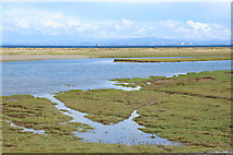 SD2362 : Saltmarsh, Lighthouse Bay and Shelly Bars by Rob Noble