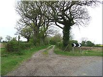 TM2768 : Footpath by Keith Evans