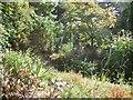 SZ0589 : Rock and Water Garden, Compton Acres by Paul Gillett