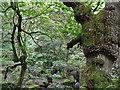 SK2579 : Padley Gorge by Stephen Burton
