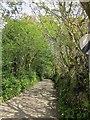 SX3167 : Lane to Thornton by Derek Harper