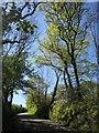 SX3171 : Lane near Longridge by Derek Harper