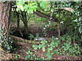 SJ4364 : Caldy Brook by Jeff Buck