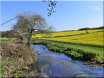SY6697 : River Cerne at Nether Cerne by Ian Allman