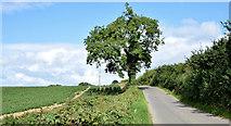 J4772 : The Killynether Road, Newtownards - August 2014(3) by Albert Bridge