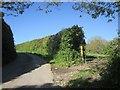 SX3368 : Lane to Trevigro by Derek Harper