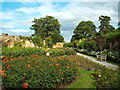 TQ4845 : Rose Garden at Hever Castle by Malc McDonald