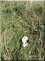 SU4784 : Scattered in the Grass by Bill Nicholls