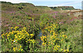 NZ8513 : Small pond on the clifftop by Pauline E