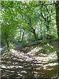 ST1105 : Footpath into Stafford Hill woodland by David Smith