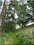 ST1105 : Footpath near Hanger Farm by David Smith