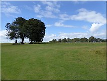 ST1006 : Trees by the gliding club by David Smith
