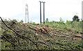 J3369 : Felled trees, Belvoir forest, Belfast - August 2014(2) by Albert Bridge