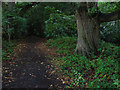 SU7767 : Footpath on Gravelpit Hill by Alan Hunt