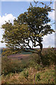 SE8594 : Tree on the edge of the Hole of Horcum by Pauline E