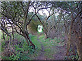TM4455 : Track through the trees, Ferry Lane, Sudbourne by Roger Jones
