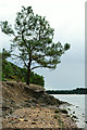 SZ0187 : Brownsea Island by Peter Trimming