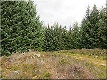 NN9147 : Road passing Loch Scoly by Richard Webb