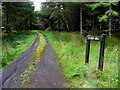 H0780 : Track to Holy Well, Slievedoo by Kenneth  Allen