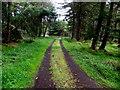 H0780 : Track, Killeter Forest by Kenneth  Allen