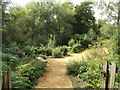 TM0733 : Wildlife Garden at Flatford by Adrian Cable