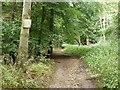 TQ0099 : Bridleway in Baldwin's Wood by Robin Webster