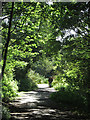 TA2169 : Path through the nature reserve by Pauline E