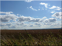 SU6022 : South Downs Way, Winchester to Exton (162) by Basher Eyre
