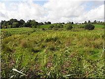 H6156 : Rough ground, Tullybyran by Kenneth  Allen