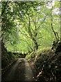 SX7287 : Lane to Drewston Cross by Derek Harper