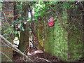 TG2713 : Overgrown M&E plinth by Evelyn Simak