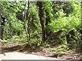 TG2712 : Overgrown blast shelter by Evelyn Simak