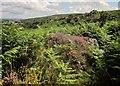 SX7478 : Moorland near Hundatora by Derek Harper