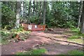 NT2438 : South end of new path in Cademuir Forest by Jim Barton